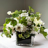Waxflower Flowers on Flower Ideas For Events  Flower Fragrances