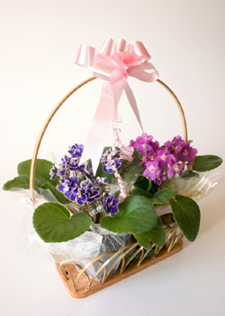 African Violets Are Abundant, Inexpensive, And Beautifully  Delicate Looking. Turn Them Into Perfect Table Decorations For A Bridal Or  Baby Shower By ...
