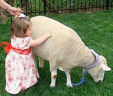Birthday kids Petting Zoo Birthday Parties