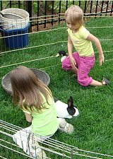 Birthday kids Petting Zoo Birthday Parties